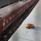 A stray dog sleeps on the roof of a platform at the New Delhi railway station, India. Pic: AP Photo/Manish Swarup
