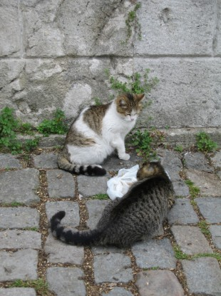 Feral cats like these have been causing a diplomatic headache for the US's new ambassador in Afghanistan.