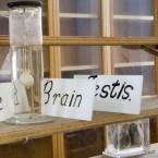 Anatomical specimens, 2006.