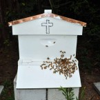 Italian Cordovan Honeybees in