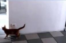 VIDEO: Cat loses game of hide and seek