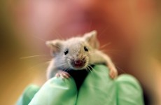 Three blind mice? New chemical helps sightless mice to see – US study