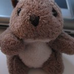 But even in teddy bear form, it's still pretty cute. (Flickr.Whisker/Flickr)
