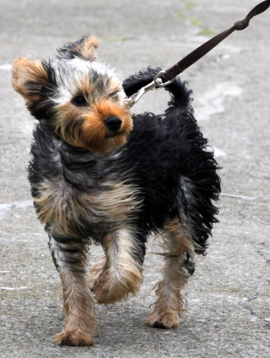 In pictures: Your wet and windswept Wednesday