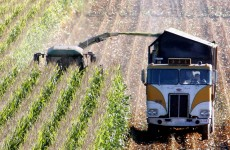 Column: GM crops aren't just about science – this is a political decision