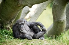 Dublin Zoo celebrates Betty and Wendy's golden years