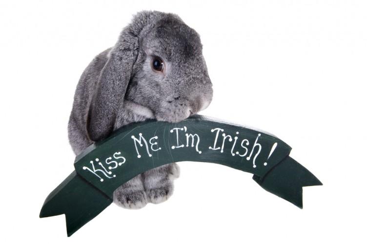 Ara Look At The Poor Craythur A Dictionary Of Odd Irish Words
