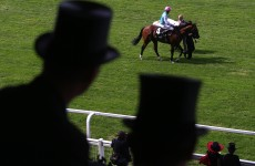 Why the long face? Take a look back at the year in horse racing…