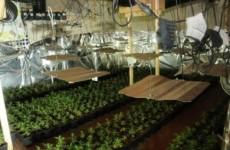 €1m worth of cannabis plants seized