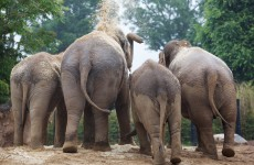 Dublin Zoo records all time high for visitor numbers in 2012
