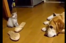 VIDEO: 16 cats being total arses