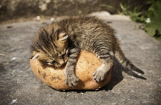A love letter to the humble potato