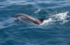 Group of children free dolphin trapped in rockpool