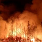 The wildfire outside Yosemite National Park. (AP PHOTO)