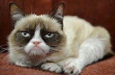 Cheer up, Grumpy Cat: You have an ad deal