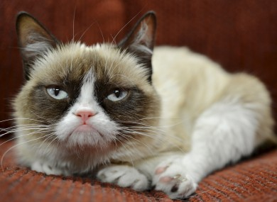 Grumpy Cat - Tardar Sauce - expresses her joy at news of the deal.