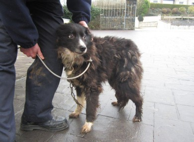 One of the dogs rescued in Cork.