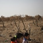Syrian refugee girls walk past a dead olive tree field, at Zaatari Refugee Camp, in Mafraq, Jordan. Zaatari, a desert camp near Jordan's border with Syria, is the largest camp of its kind in the region. It is home to more than 100,000 people who have fled the bloody Syrian civil war that continues to rage. <span class=