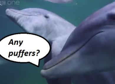 Risultati immagini per high dolphins