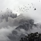 A flock of birds fly near Mount Sinabung as seen from Berastepu, North Sumatra, Indonesia. About 15,000 people have been evacuated from 17 villages on the slope of Mount Sinabung after authorities raised the alert status of the volcano to the highest level last week. <span class=