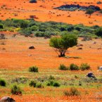 Journey to Namaqualand, an arid region in Namibia and South Africa that stretches over some 600 miles. Every spring, the barren area suddenly fills with orange and white daisies, creating one of the most surreal landscapes in the world.<span class=
