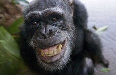 'Chimps are people too' US court told