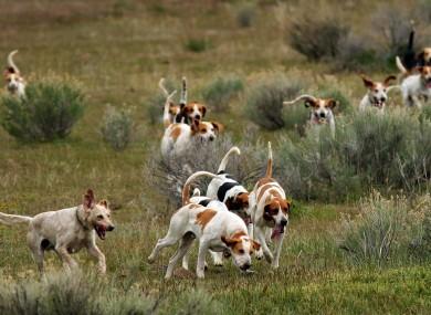 How To Train A Hound Dog To Hunt
