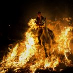 A man rides a horse through a bonfire as part of a ritual in honour of Saint Anthony, the patron saint of animals, in San Bartolome de Pinares, about 100 km west of Madrid, Spain. On the eve of Saint Anthony's Day, hundreds ride their horses through the narrow cobblestone streets of the small village of San Bartolome during the