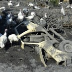Turkeys move around a a car buried in mud and rubble after a landslide at the village of Topcic Polje, near the Bosnian town of Zenica.<span class=