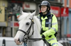 Here's some of what the Gardaí's animals got up to last year