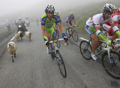 They're watching ewe: Sheep on the Tour de France.