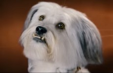 VIDEO: Your weekend movies… Pudsey the Dog