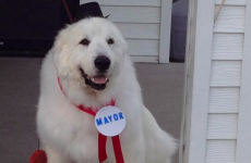 A small town in America has elected a dog as their mayor