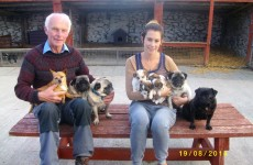 Happy ending: Gardaí find 9 dogs which had been stolen from a Kerry pet farm