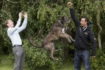This dog can jump as high as Ryan Tubridy's head