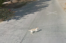 This dog may have gotten in the way of a Google Street View car…