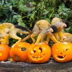 A pumpkin massacre... <span class=