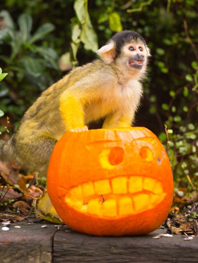 Slideshow: These zoo animals are mad about Halloween