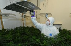 Two men arrested after smell led officers to cannabis factory