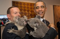 Ah lads, the koala pictures…