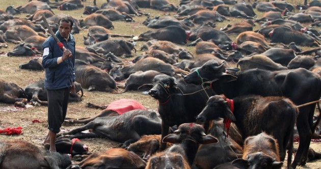 Thousands of animals slaughtered in honour of Hindu goddess