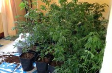 Man arrested after 150 cannabis plants found in Wicklow house