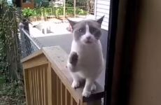 This screaming cat sums up everyone's feelings about going outside tonight