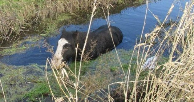 PHOTOS: Cork firefighters rescue horse stuck in river