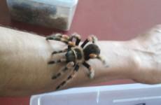 Snakes, tarantulas and venomous scorpions found in Cork house