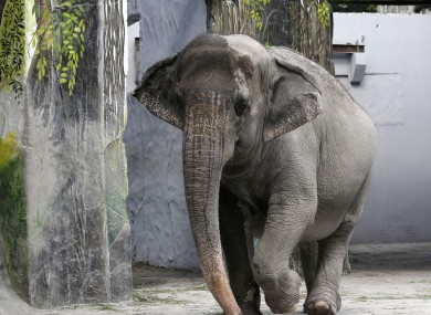 Photo: File picture, not the elephant involved