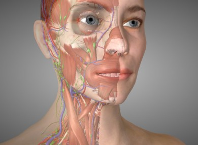 One of the models from Essential Anatomy 5, one of 3D4Medical's most successful apps.