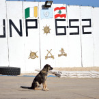 Cpl Junior:  'Merry Christmas to all my K9 friends in Ireland. I will keep watch over your men and women on UN Post 6-52 until they return home to you in May, safe and sound! Woof Woof (Squirrel!) Woof Woof, XXX.'
