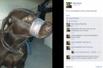 Woman charged after duct taping her dog's mouth shut and posting picture to Facebook