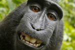 Judge rules selfie monkey can't own photo copyright